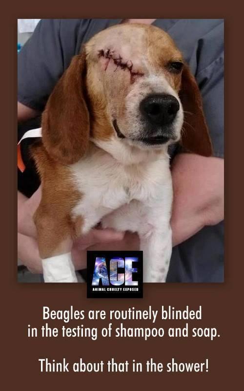 loreal-beagle-testing